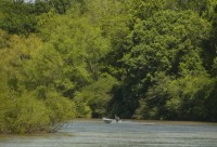 Bottomland hardwood forest along Great Pee Dee protected by Pee Dee Land Trust, DNR